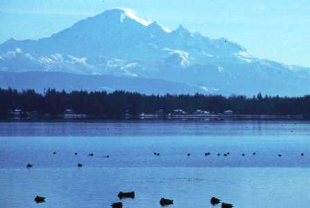 Mt Baker from Semiahmoo