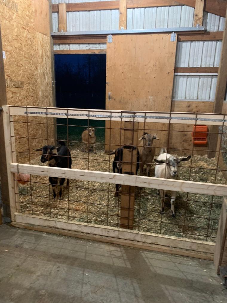 2019 goats